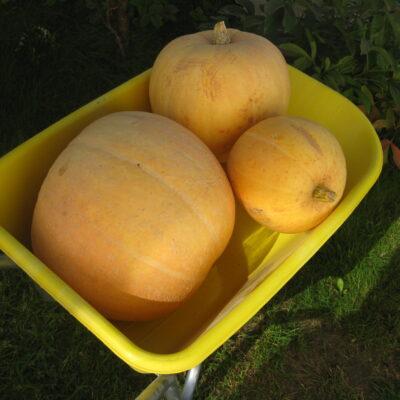Mažas daržas – planuojame ir ruošiame rudenį