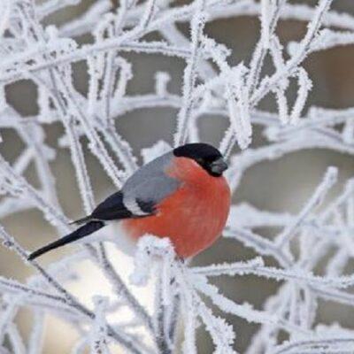 Kaip pritraukti paukščius ir gyvūnus žiemą į savo sklypą