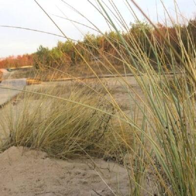 Augalai Vakarų Lietuvoje: ką auginti