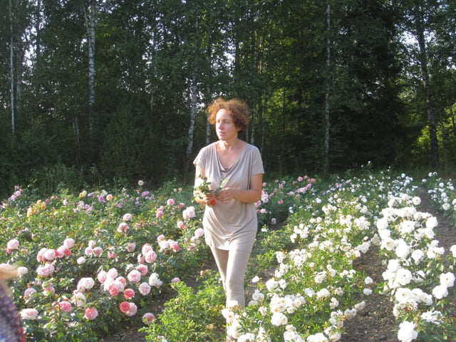 Dovile Ryliene Sibirkos rozynas atsparios rozes