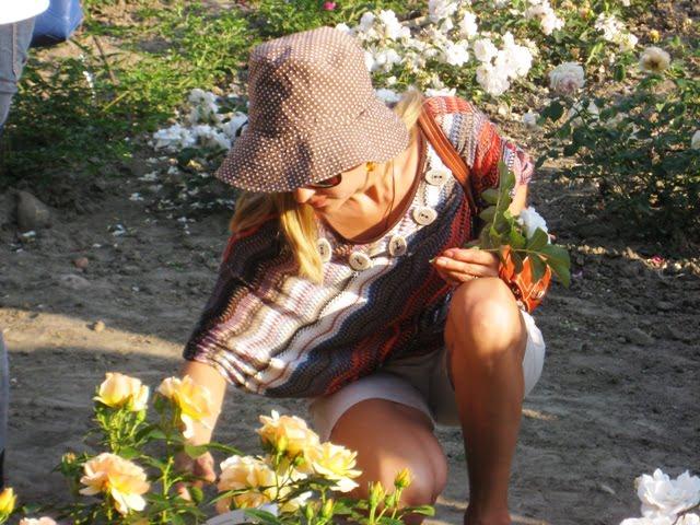 Kvepiančios rožės - įvairiausi skirtingi kvapai