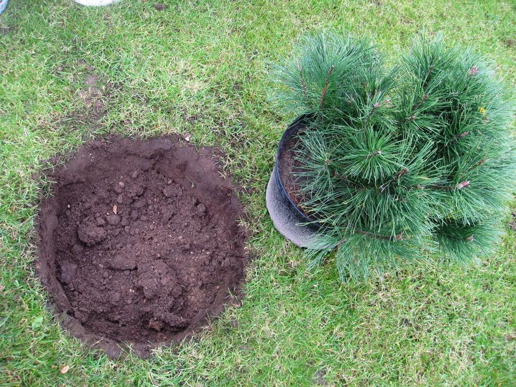 Nuotraukoje matote sodinimui iškastą duobę, bet ji per maža. Nuotr. aut. L. Liubertaitė.