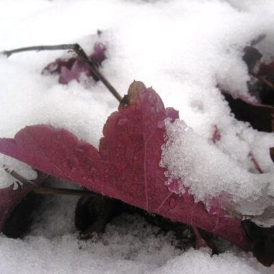 Gražus sklypas žiemą: kaip tai padaryti