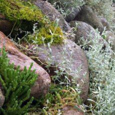 alpinariumas ir naujas poziuris i akmenis Geltonas karutis