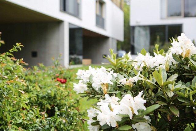 Baltai žydintys rododendrai pratęsia fasado koloritą. © DELFI (K. Čachovskio nuotr.)