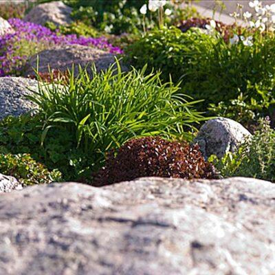 Dekoratyviniai akmenys alpinariumui: kaip pasirinkti ir sudėti