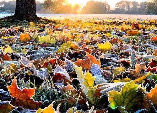 Spalvoti lapai - rudens grožis!