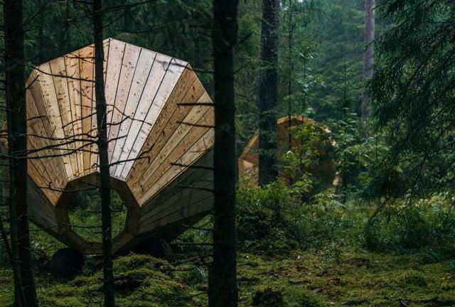 Niūri miško tankmė ir megafonai