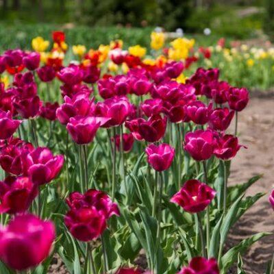 2016 pavasario žydėjimo šventės, parodos, sodinukų mugės