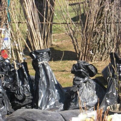 Kad sodinukų mugė nesibaigtų tuščia pinigine ir sergančiais augalais