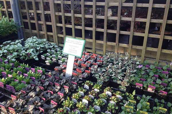 Sodinukų mugė gausi ir atvežtiniais augalais, skaitykite jų etiketes. Nuotr. iš http://www.springwoodgardencentre.com