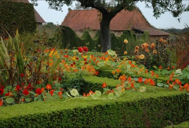 Nasturtės Le Jardin Plume sode Prancūzijoje. Nuotr. Carrie Preston