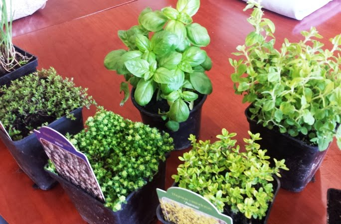 Pasirenkame augalus