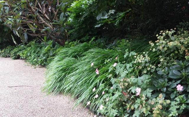 Dekoratyvinės žolės