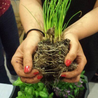 Kaip sukurti gražią kompoziciją vazone su prieskoniniais augalais