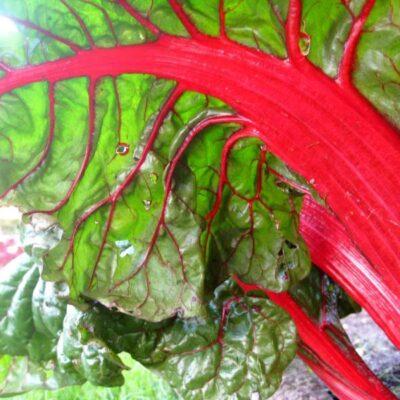 Lengvai užauginamos daržovės, kurios mažina kraujo spaudimą