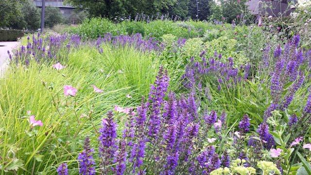 Nuosaikus banguojantis daugiametis gėlynas. Aut. Piet Oudolf, Potters' Fields, Londonas. Nuotr. L.Liubertaitė