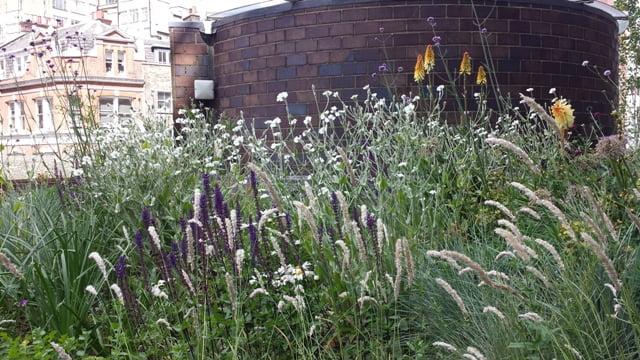 Į gėlių derinius įtraukite ir aplinką, kuri supa. Barbican Gardens, aut. Nigel Dunnett, Londonas. Nuotr. L.Liubertaitė