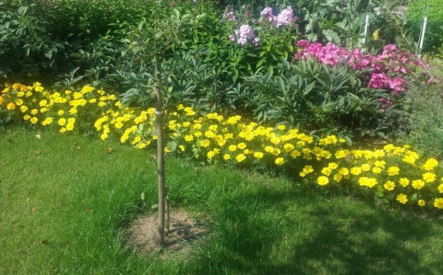 Ryški geltona ir aukšti žiedai rožinės - kas čia dominuoja?