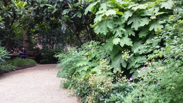 Vešli augmenija parkelyje vidury Londono. Nuotr. L.Liubertaitė