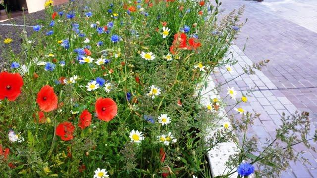 Natūralios pievos idėja, atsidūrusi vidury Londono. Nuotr. L.Liubertaitė