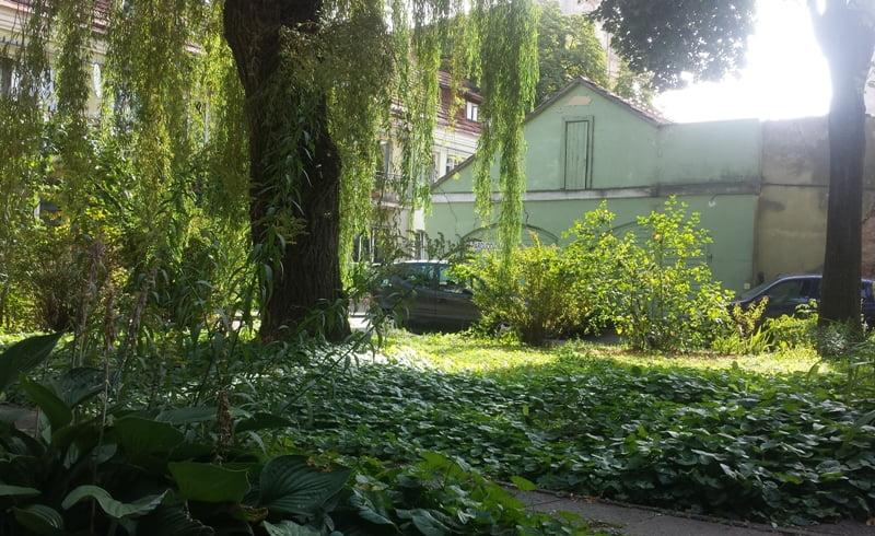 Brandūs medžia.i Vilniaus senamiesčio kiemelis