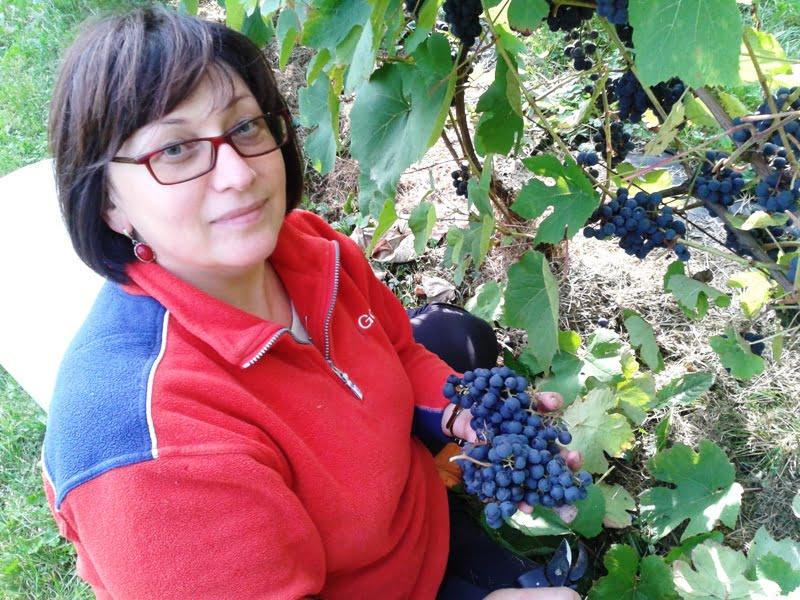 Dr. Asta ramaškevičienė užtikrina, kad ir Lietuvoje vynuogių auginimas - misija įmanoma.,