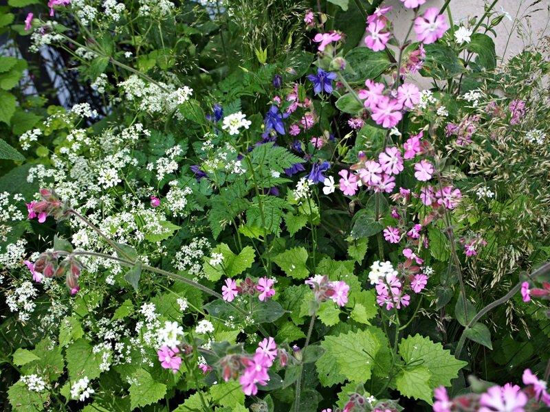 Čelsio gėlių paroda