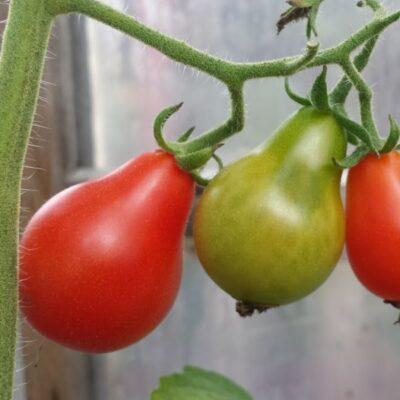 Šiltnamis prieš žiemą: kaip jį paruošti geram kitų metų derliui
