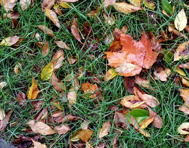 lapų kompostavimas Geltonas karutis