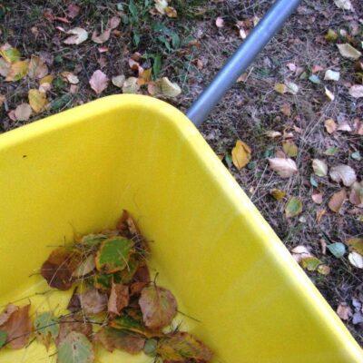 Ką daryti su prikritusiais lapais kieme