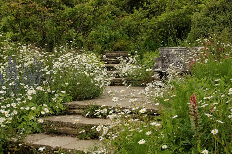 Laukiniai augalai Gravetye Manor sode (Anglija).