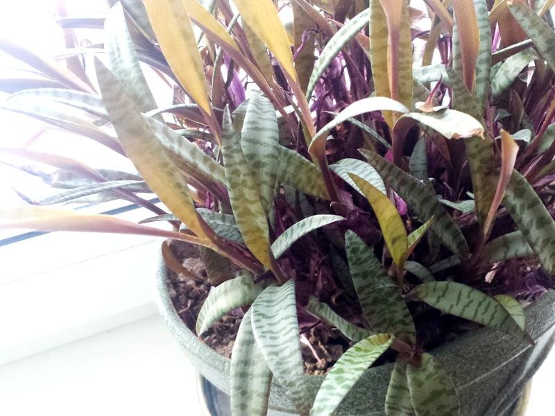 Kambariniai augalai žiemą