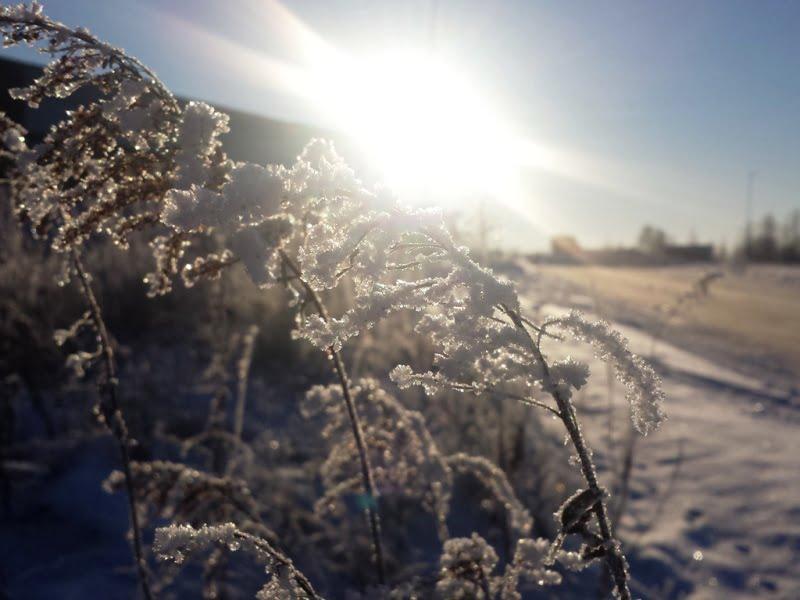 Šalčio poveikis kartais būna ne toks stiprus, kiek spiginančios saulės sukeliamos pasekmės. Nuotr. L.Liubertaitė