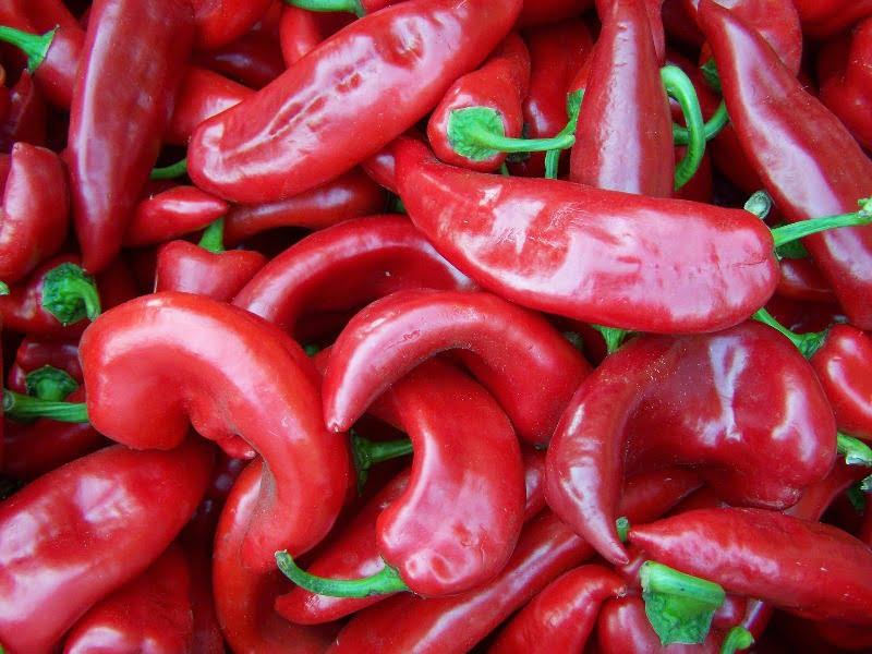 Aštrių paprikų auginimas iš esmės nesiskiria nuo saldžiųjų paprikų auginimo.