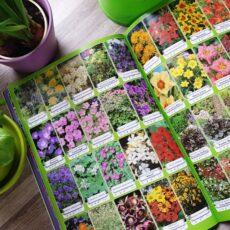 Dekoratyvinių augalų katalogas Geltonas karutis