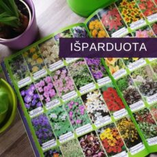 Dekoratyvinių augalų katalogas 0324