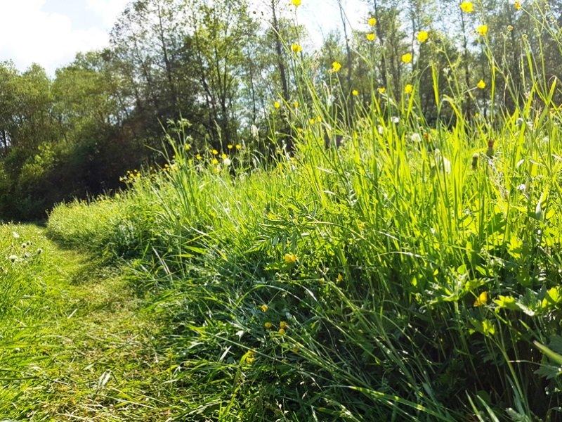 Kaip tręšti veją, kad jai nepritrūktų maisto medžiagų?