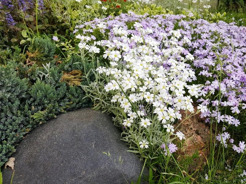 Nesirinkite daugybės skirtingų rūšių augalų. Geriau pasirinkite kelias ir sodinkite jas grupėmis