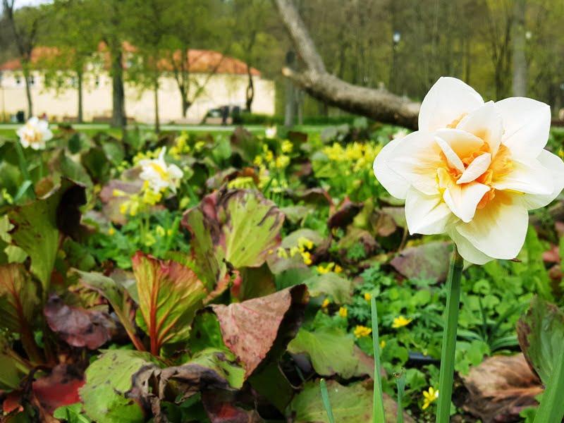 Spalvų derinimas - augalus derinkite prie pastato fasado. Tobulai atitaikytas atspalvis. Bernardinų sodas pavasarį.
