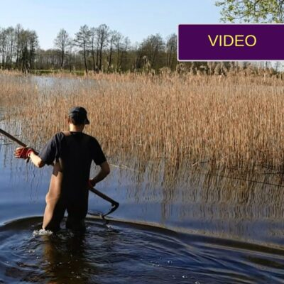Nendrių naikinimas: tvarkome apžėlusią ežero pakrantę
