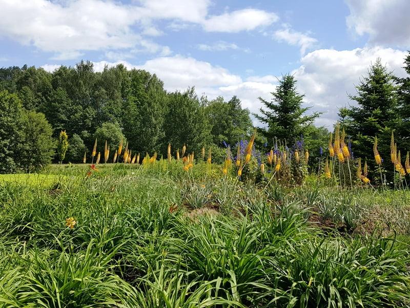 Ar laukiniai augalai ir natūralistinio stiliaus augalai yra tas pats?