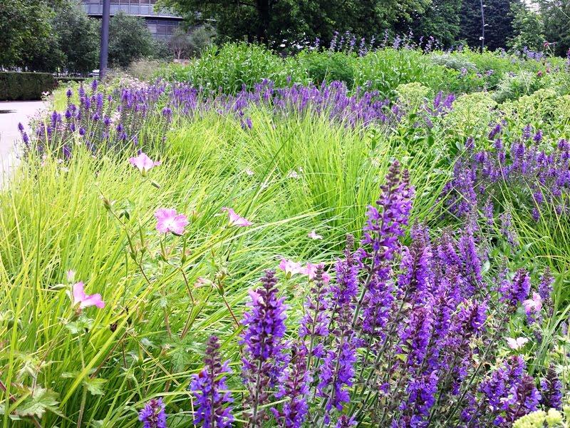 Natūralistinis apželdinimas. Augalai turi augti taip, kad tarp jų nebeliktų tarpų– taip išvengsite ravėjimo. Nuotr. L. Liubertaitė