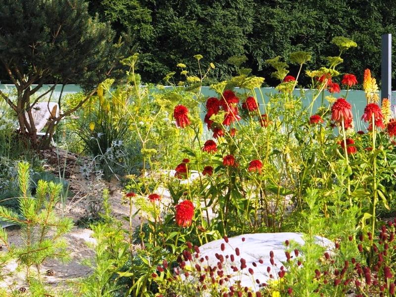 Ūlos Marijos sodo biūrą supantys augalai