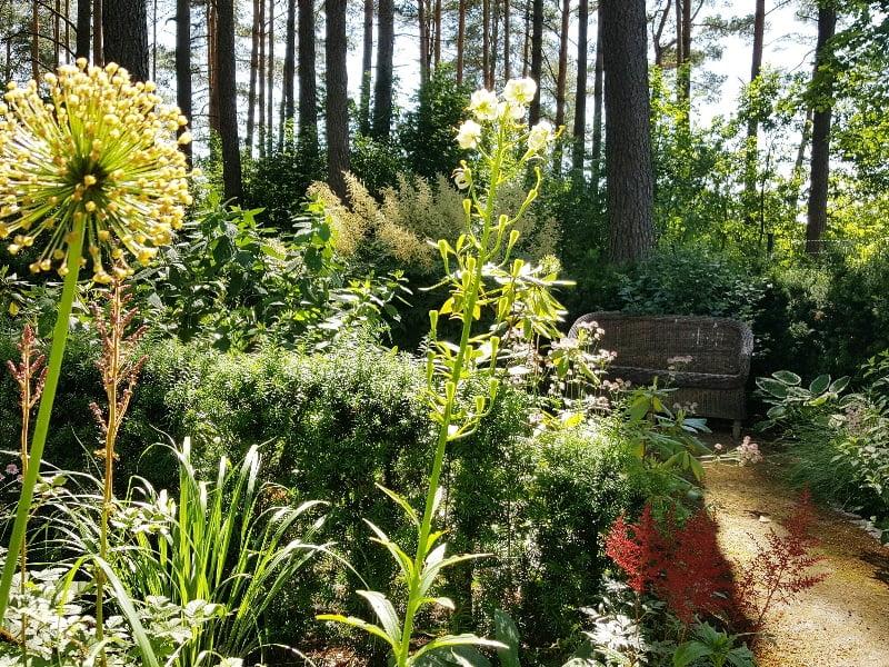 Nors įprasta derinti spalvas, tačiau galima derinti ir augalų aukšti. Štai puikus pavyzdys – dekoratyvinis česnakas ir aukštos lelijos.