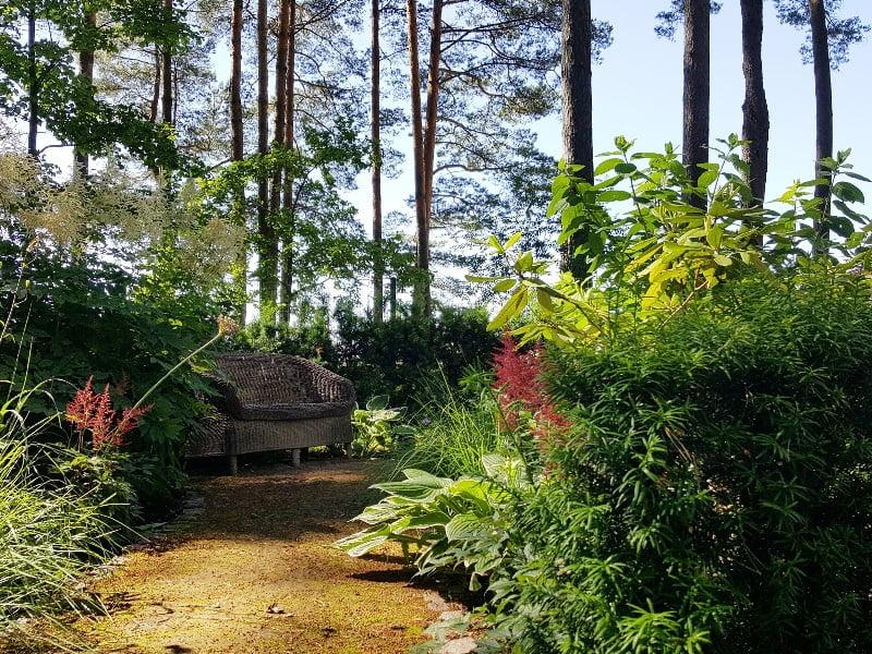 Žalia spalva ir skirtingos augalų faktūros – kukmedžiai, melsvės ir dekoratyvinės žolės