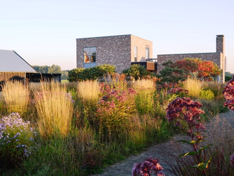 Pirmas žingsnis, norint savo kieme sukurti natūralistinį želdyną - sumažinti vejos plotus, pasodinti savaime pasisėjančių gėlių ir įvesti dekoratyvinių žolių. Projekto aut. Piet Oudolf, asmeninio Noel Kingsbury arch. nuotrauka.