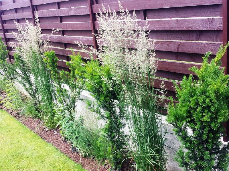 Aukšti augalai ir plokščias vejos paviršius –  kontrastas, kuris suteikia išraiškingą efektą.