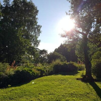 Aplinkos tvarkymas rugpjūtį: 3 patarimai gražiam kiemui