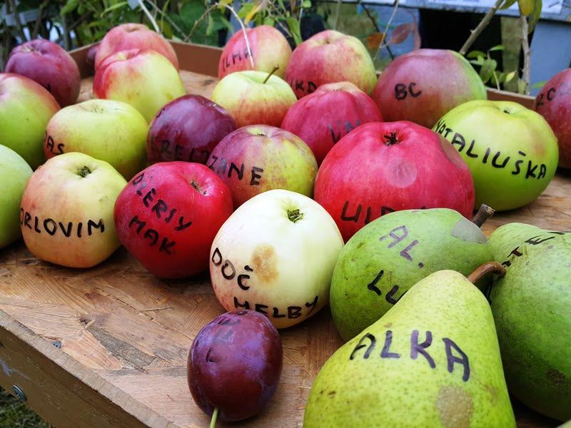 Rinkdamiesi sodinuką, atkreipkite dėmesį į veislę. Tai jums suteiks svarbios informacijos apie augalą: kokio aukščio jis augs, ar bus atsparus ligoms, kokio skonio bus vaisiai ir pan.